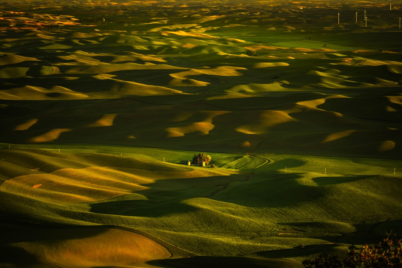 Palouse Morning From Steptoe Butte