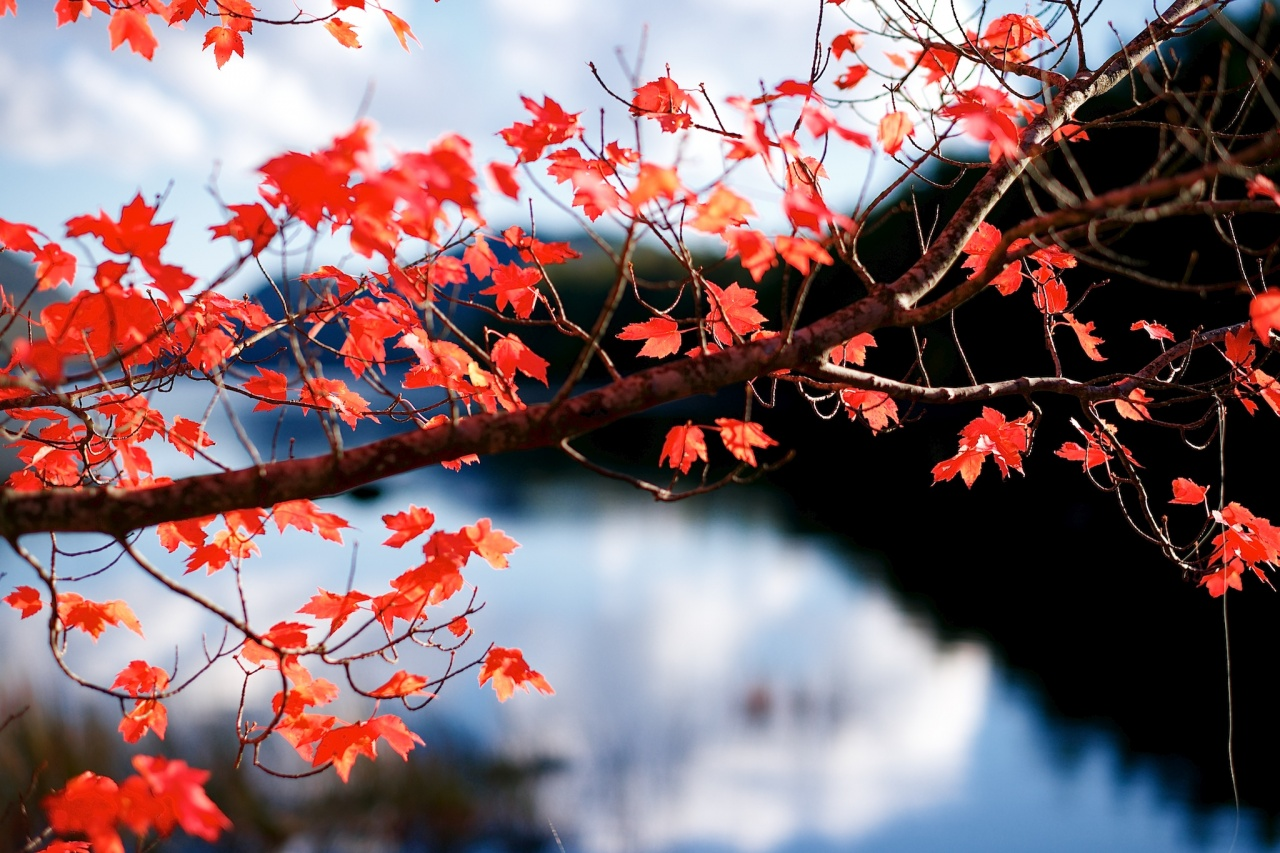 Red Leaves, Blue Water – Plus 5-Year Blogiversary